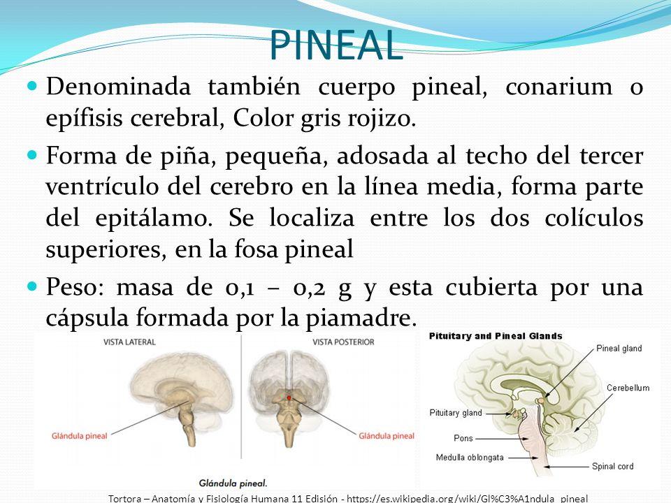 UNIVERSIDAD CENTRAL DEL ECUADOR - ppt descargar