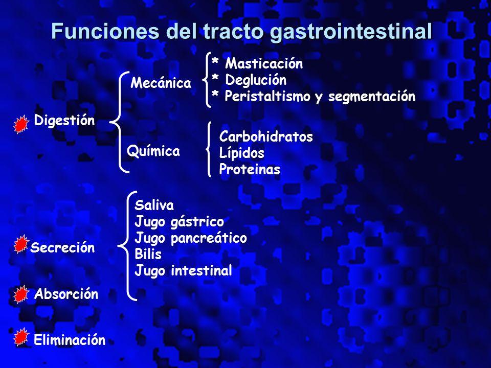 Fisiología del Sistema Digestivo - ppt video online descargar