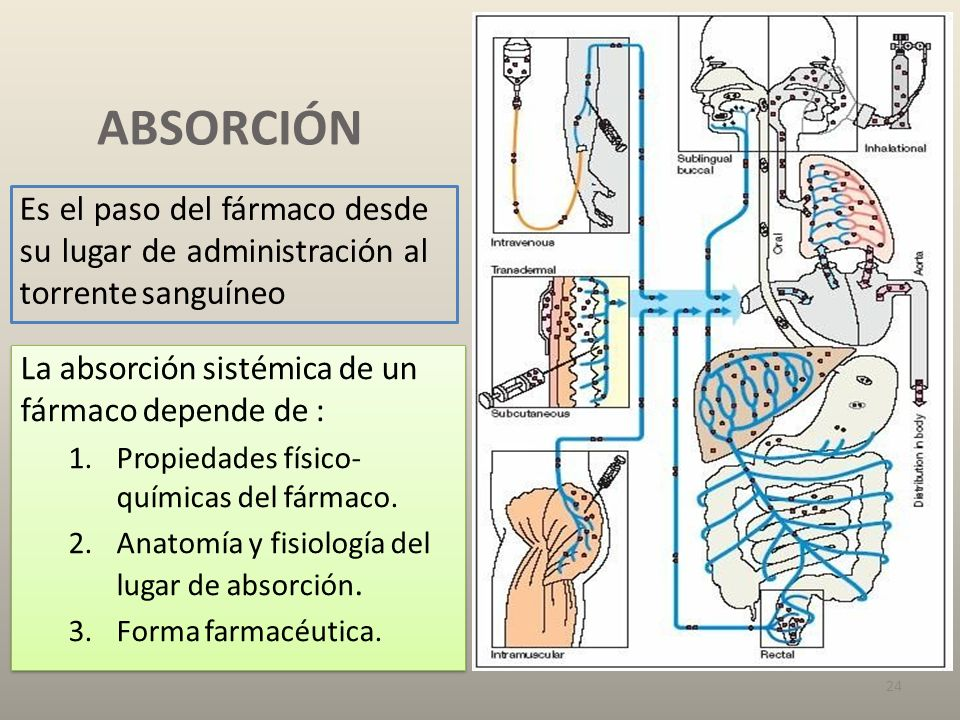 Farmacocinética FARMACOCINÉTICA Y FARMACODINAMIA Farmacología básica ...