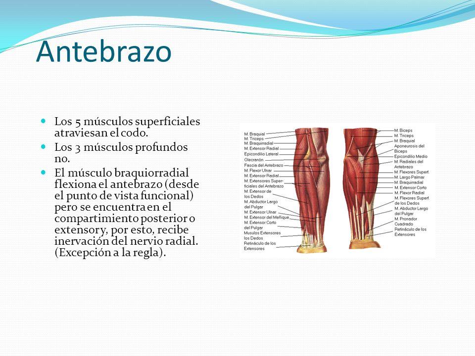 Dr. Pablo Schaufele Muñoz Cátedra Anatomía Universidad Católica S.C. ...