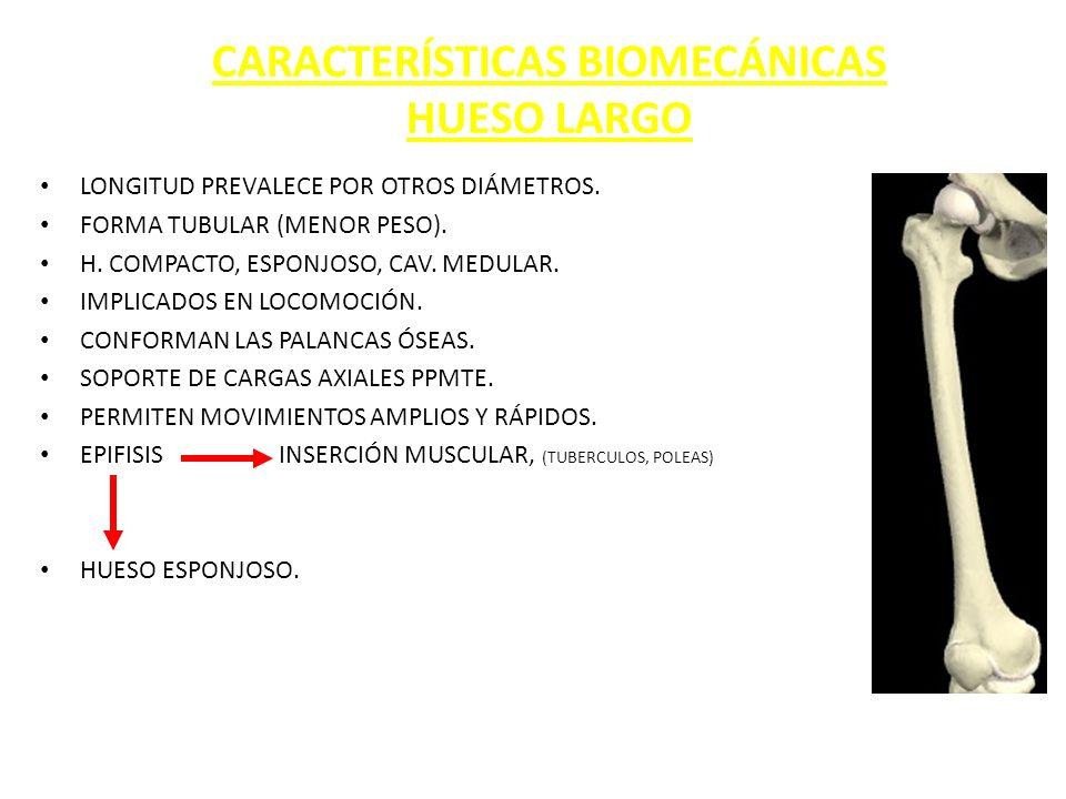 BIOMECANICA del tejido óseo. - ppt descargar