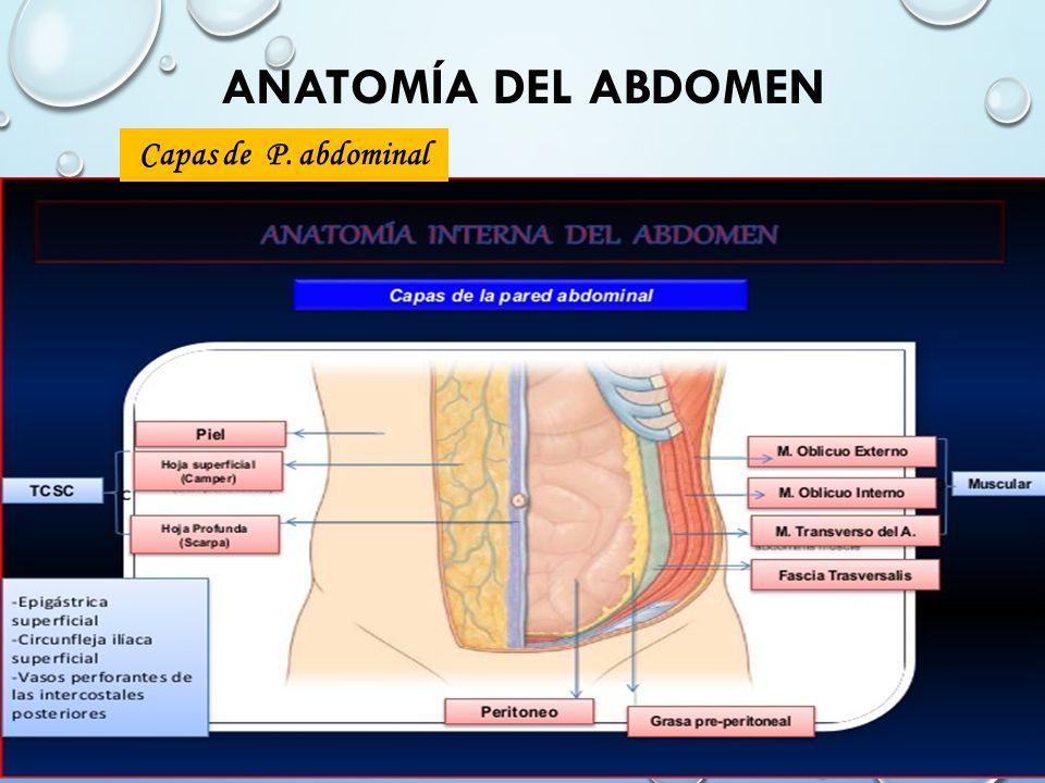 Lujo Anatomía Del Abdomen Ppt Inspiración - Anatomía de Las ...