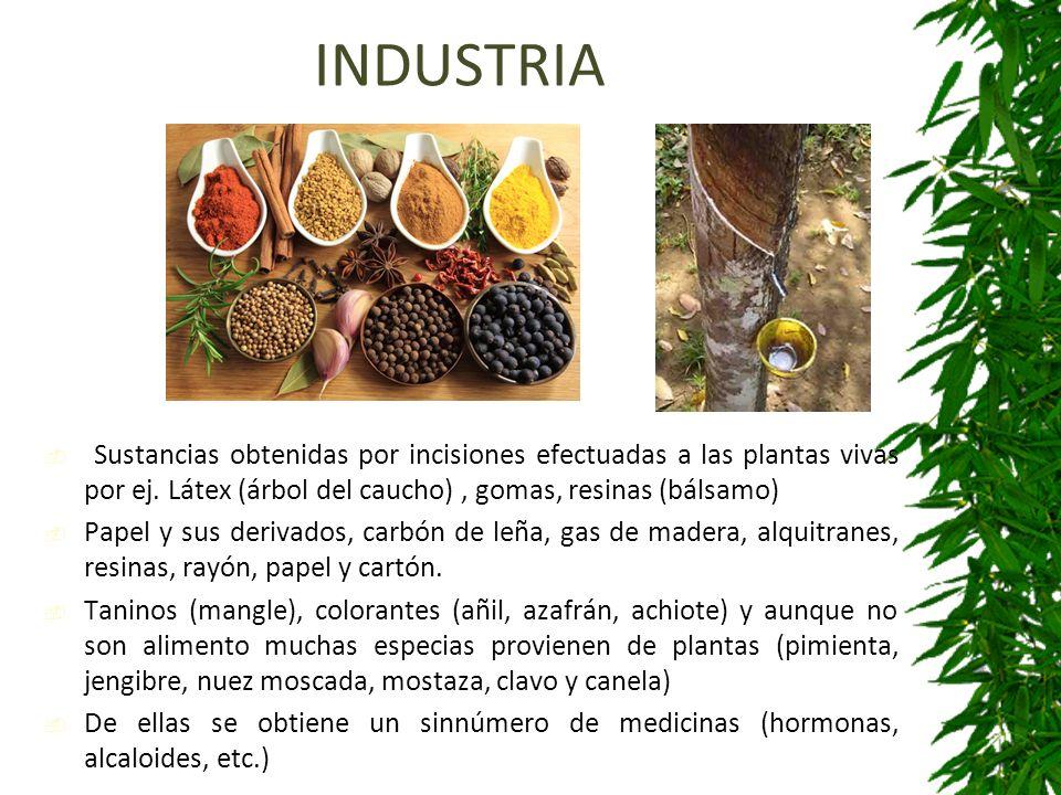 Asombroso Colorante De Alimentos árbol De Dólar Imagen - Ideas Para ...