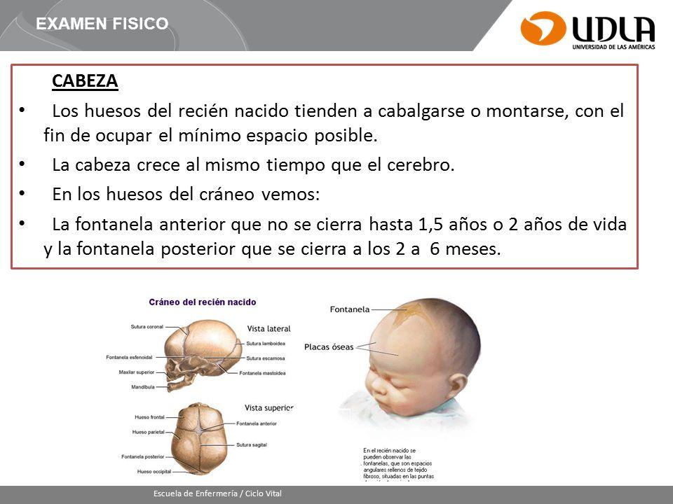 Moderno Fontanela Mastoidea Componente - Imágenes de Anatomía Humana ...