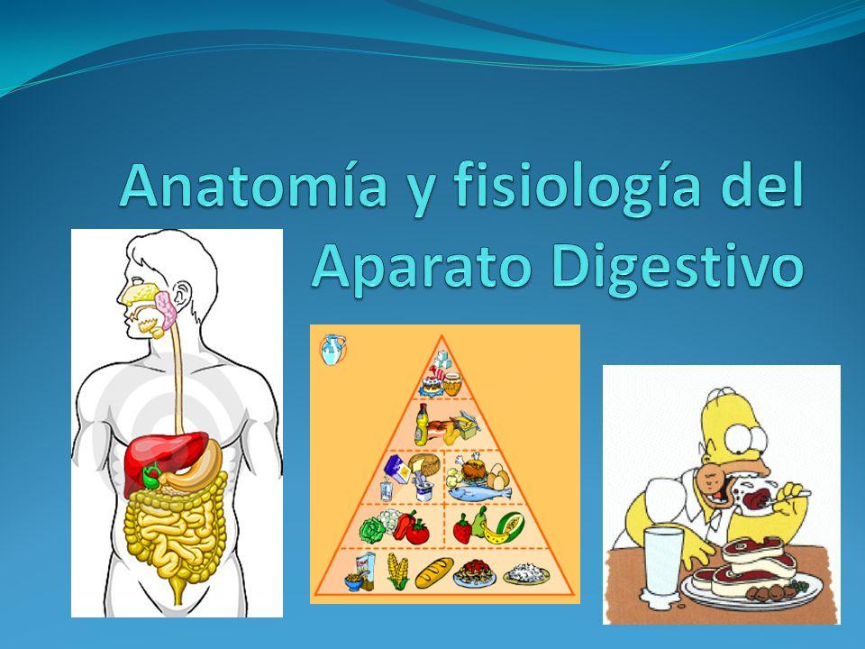 Perfecto Proyectos De Anatomía Y Fisiología Fotos - Anatomía de Las ...