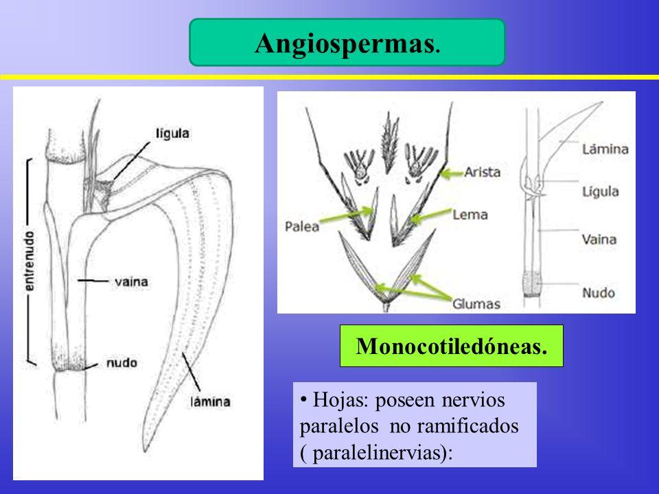 Diferencias entre monocotiledóneas y dicotiledóneas. - ppt video ...