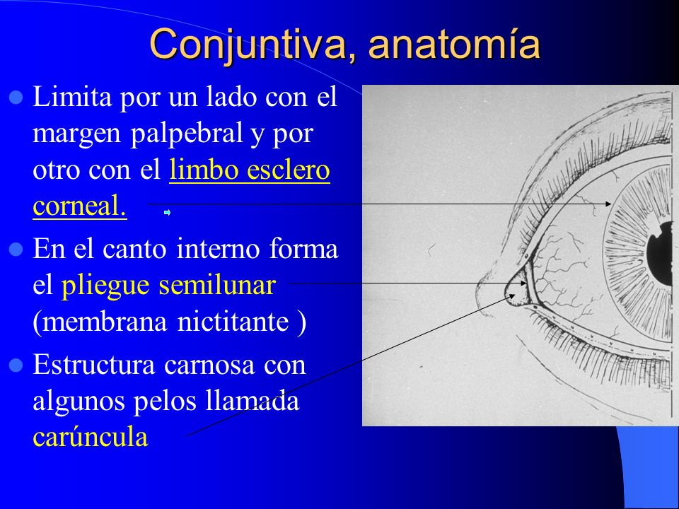 CONJUNTIVA (I). - ppt video online descargar