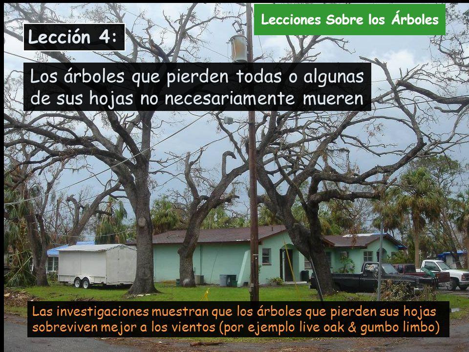 Programa de restauraci n del bosque urbano afectado por for Arboles que no pierden sus hojas en otono