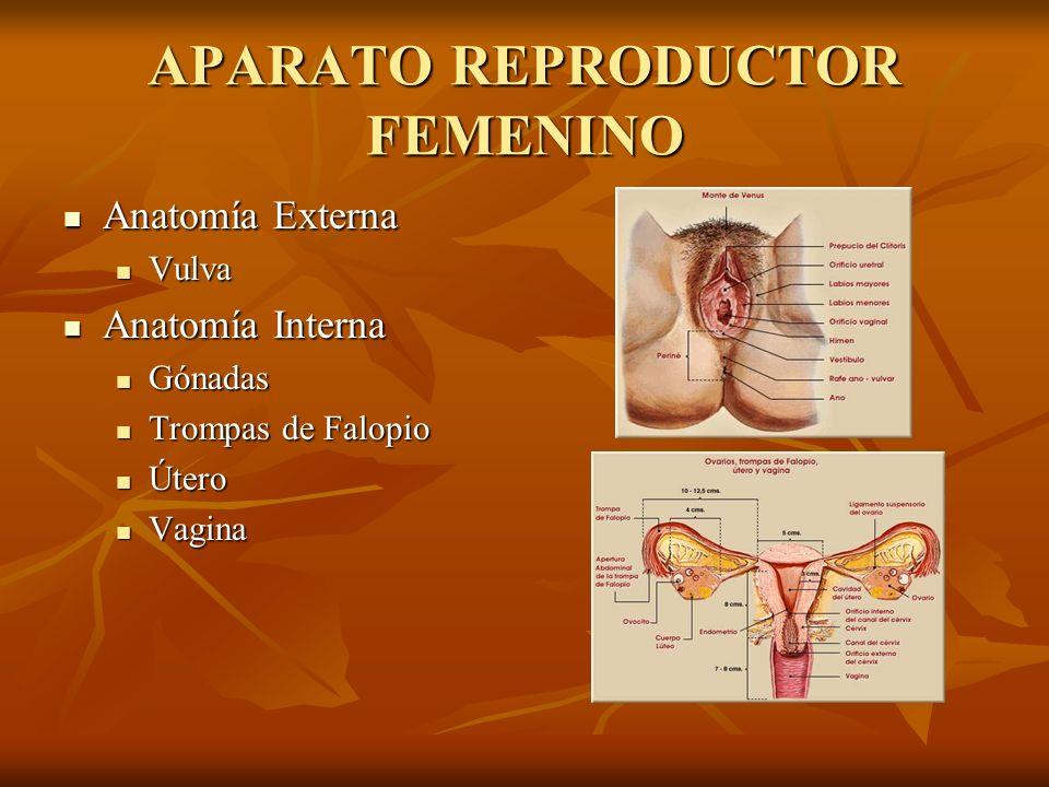 Perfecto Monte De Venus Anatomía Festooning - Imágenes de Anatomía ...