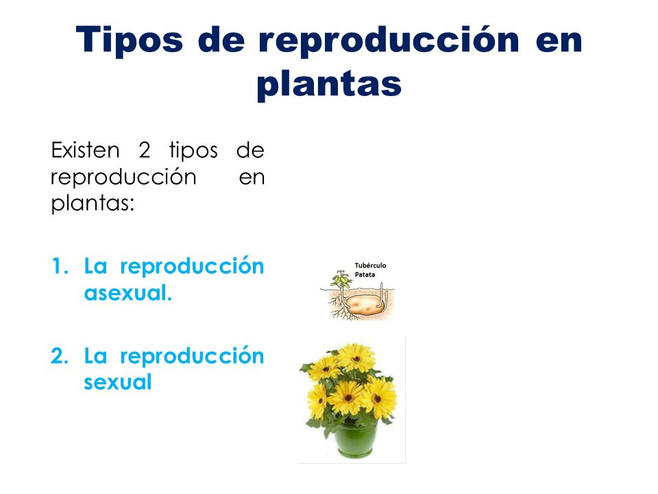 2 clases de reproduccion asexual artificial