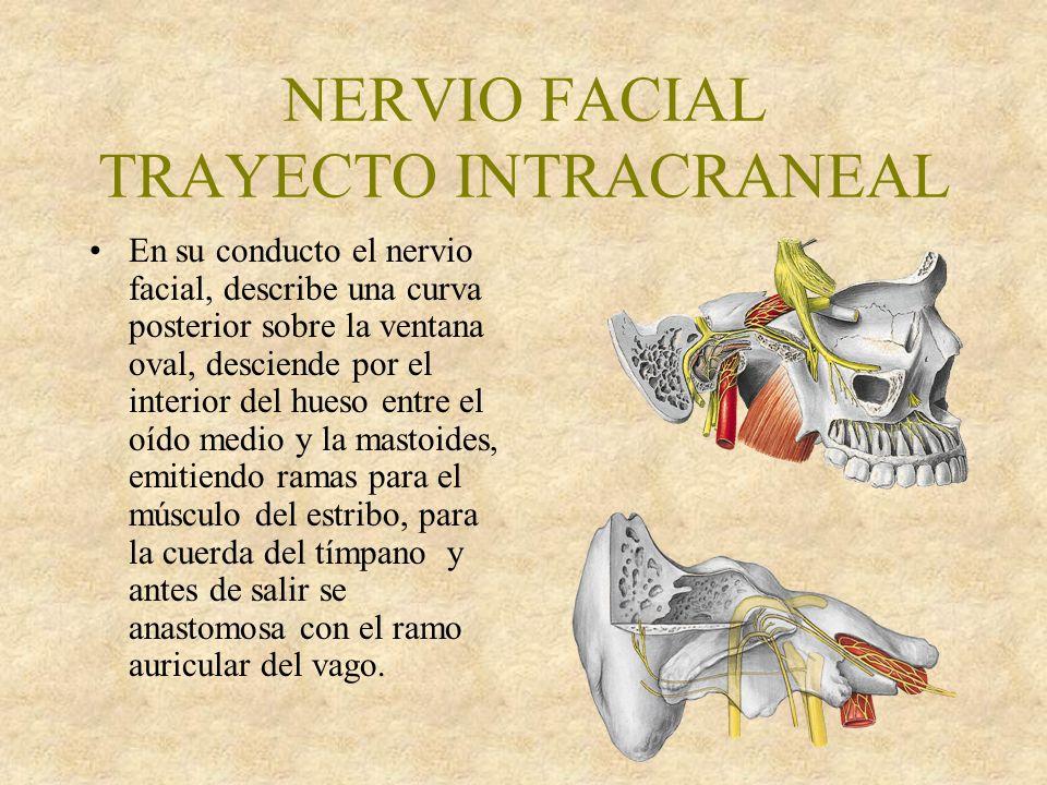 NERVIO FACIAL NERVIO AUDITIVO - ppt video online descargar