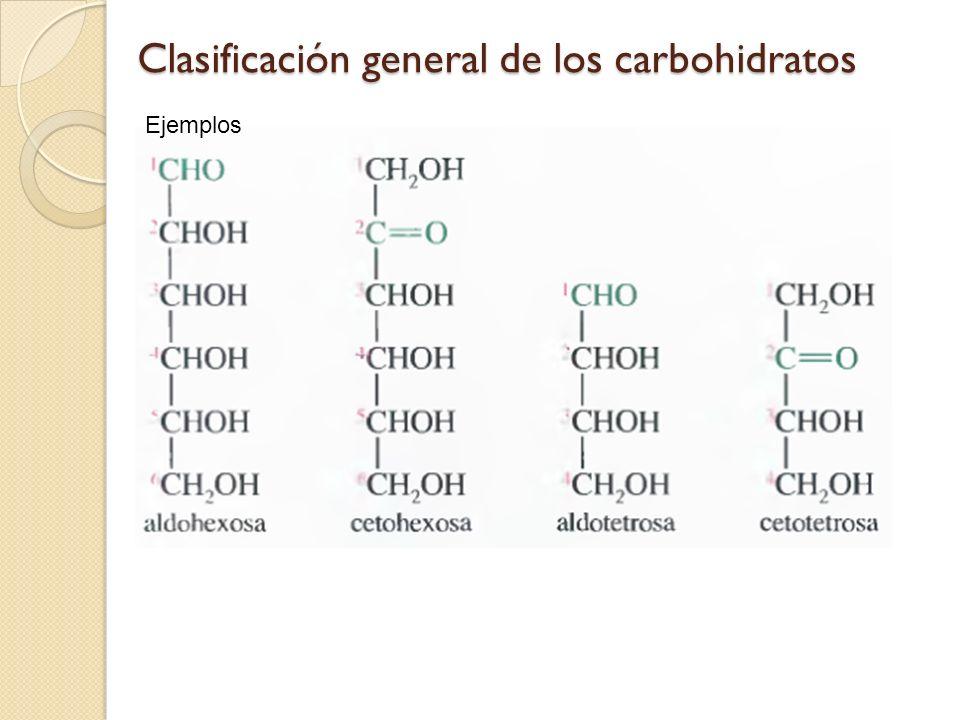 Carbohidratos Estructura Monosacáridos Y Oligosacáridos