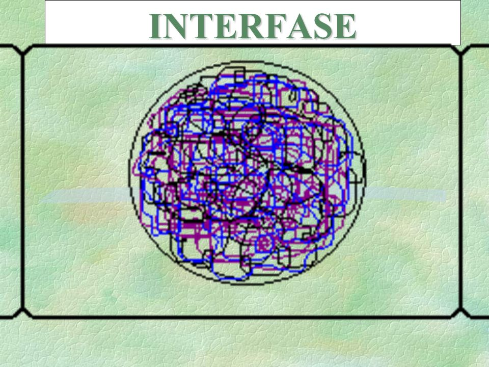 INTERFASE