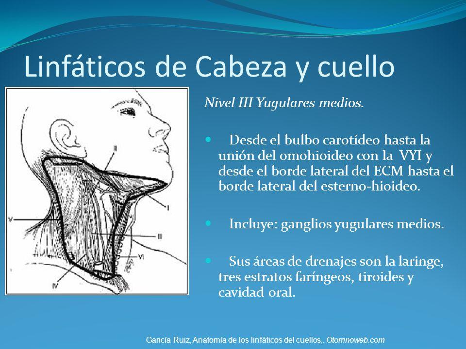 Anatomía y Fisiología Del Sistema Linfático - ppt video online descargar