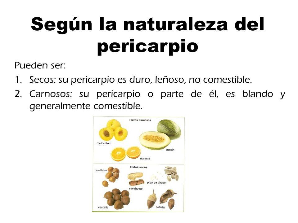 El fruto En botánica, el fruto es el órgano procedente de la flor, o ...