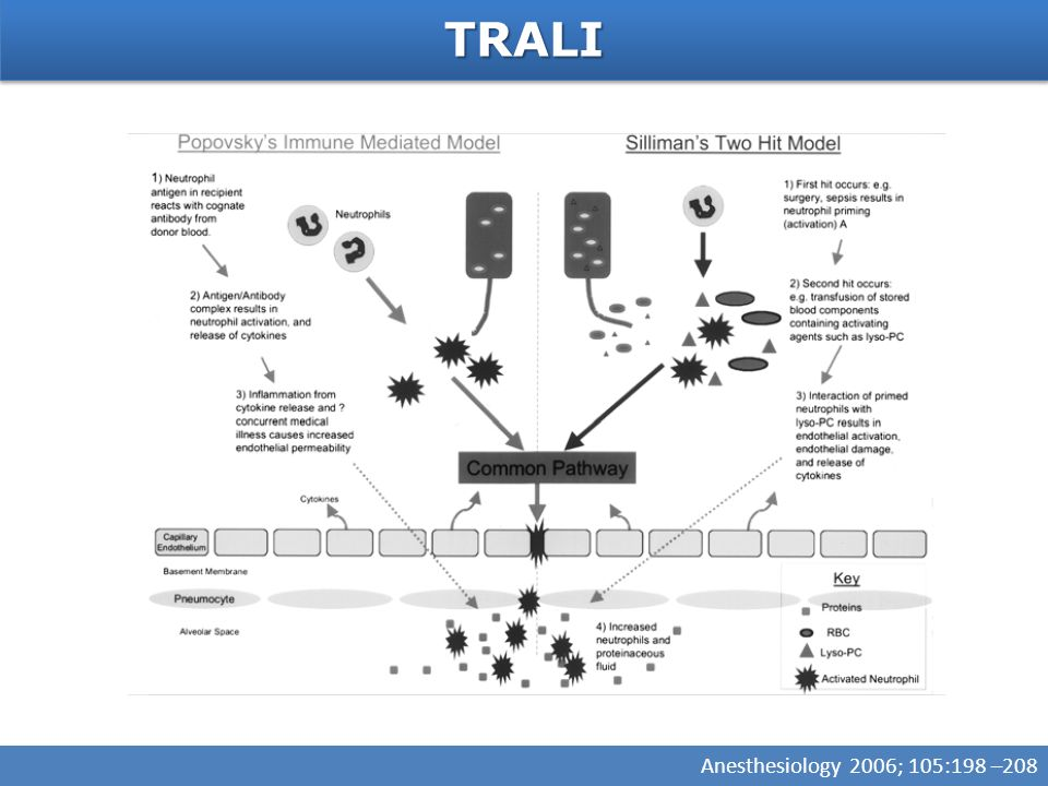 TRALI Anesthesiology 2006; 105:198 –208