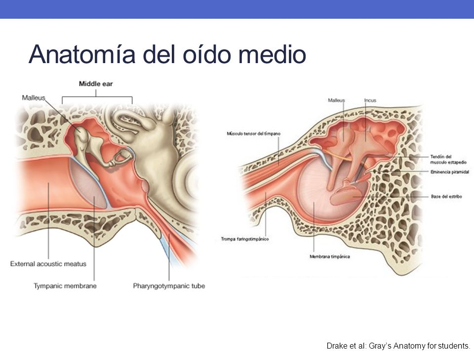 Otitis media aguda en pediatría - ppt video online descargar