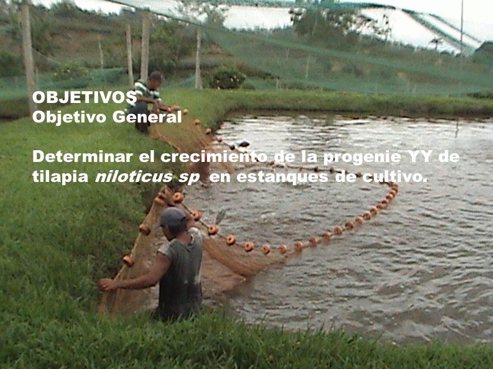 Conocimiento de las t cnicas para determinar el for Estanques para cria de tilapia