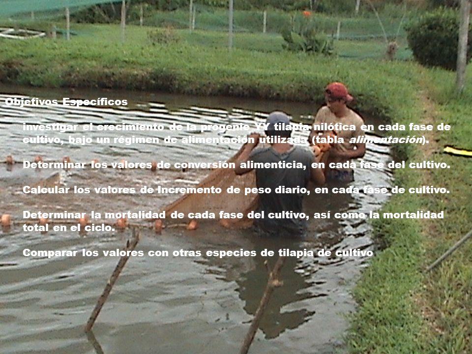 Conocimiento de las t cnicas para determinar el for Tabla de alimentacion para tilapia roja
