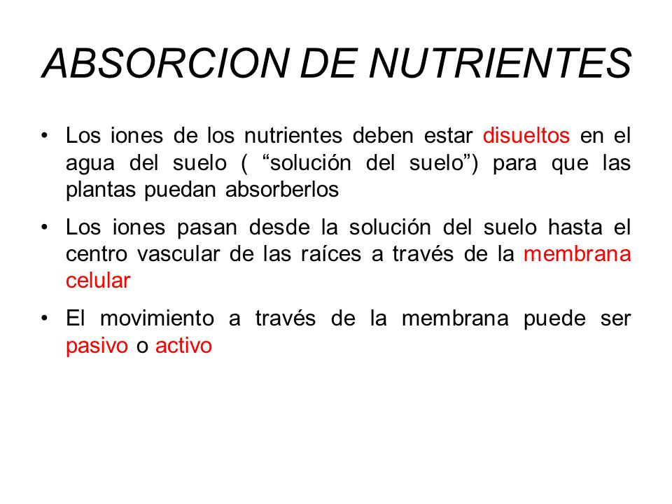 ABSORCION DE NUTRIENTES