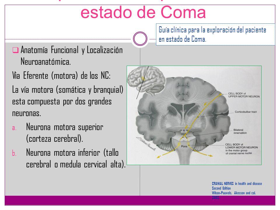 Increíble Motora Superior Neurona Anatomía Embellecimiento ...