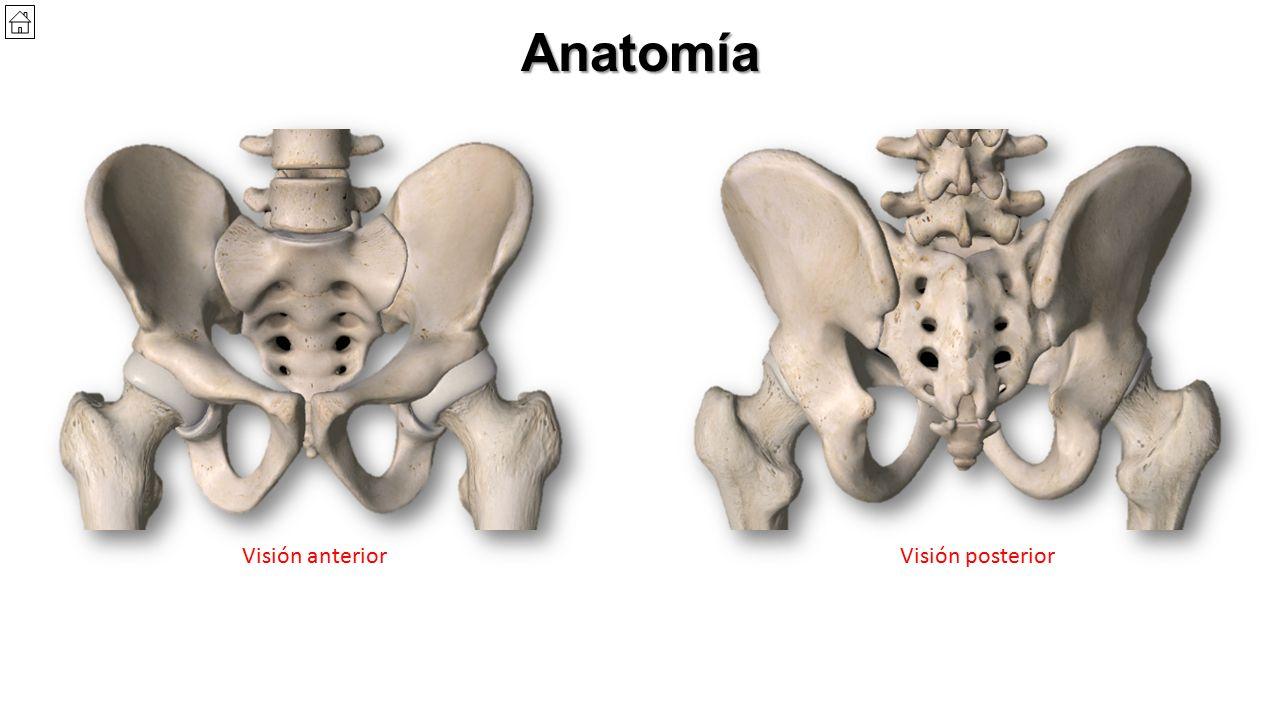 Encantador Imágenes Anatomía De La Pelvis Fotos - Imágenes de ...
