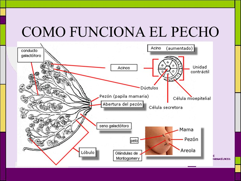 "Tu farmacia a favor de la lactancia materna"" - ppt video online ..."