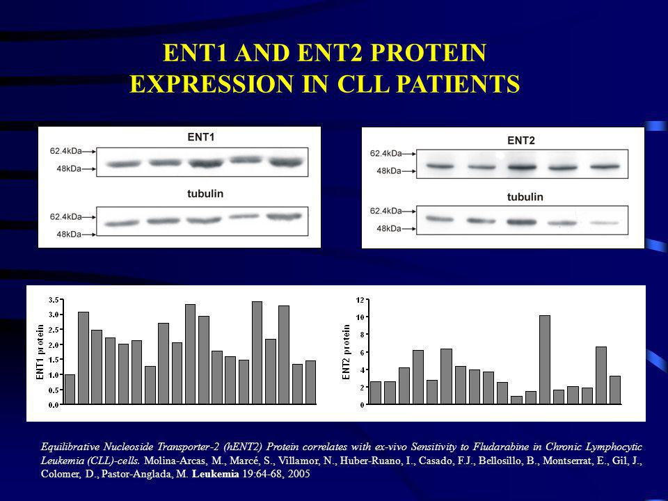 ENT1 AND ENT2 PROTEIN EXPRESSION IN CLL PATIENTS