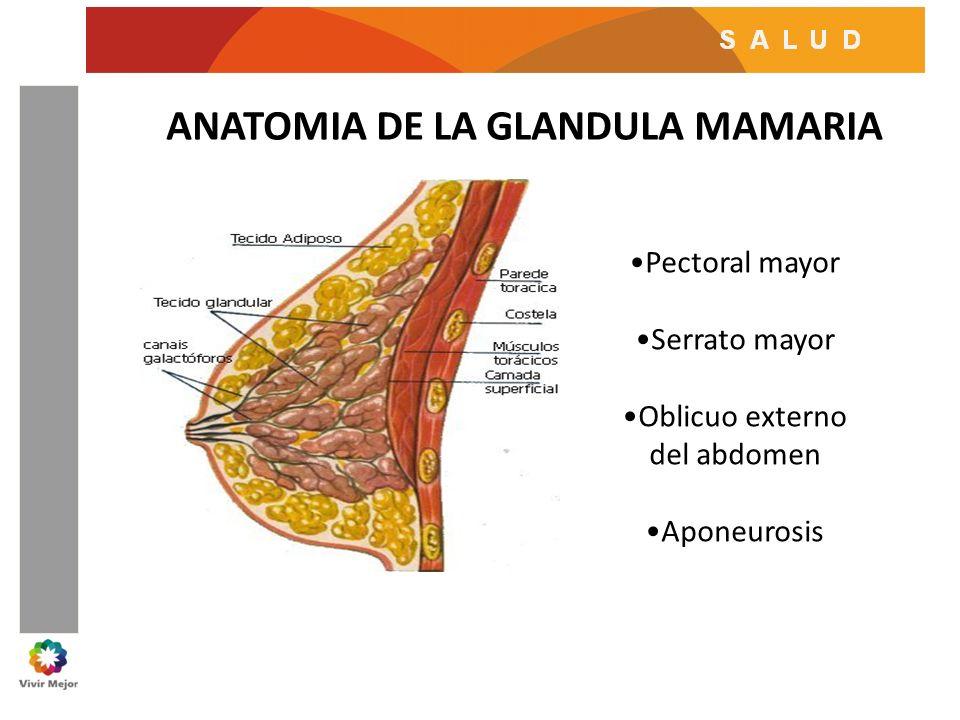La Glándula Mamaria Inervación — Vila \