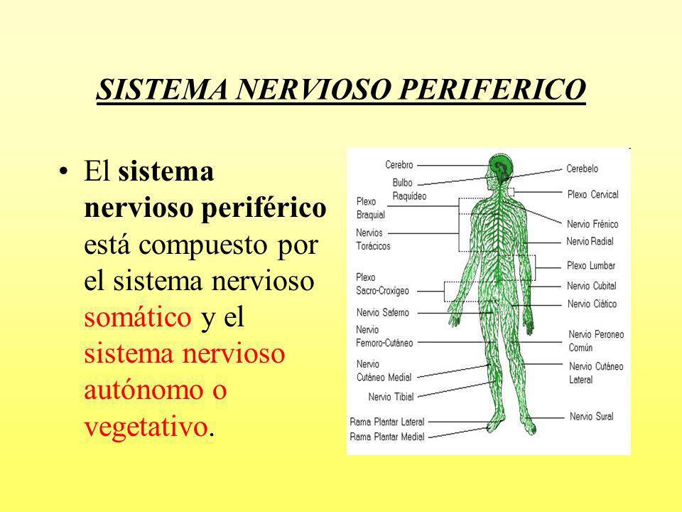 Presentación Ud9 Sistema Nervioso - Telegram Sex