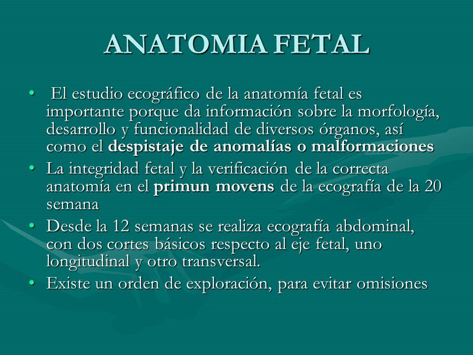 ANATOMIA ECOGRAFICA FETAL - ppt descargar
