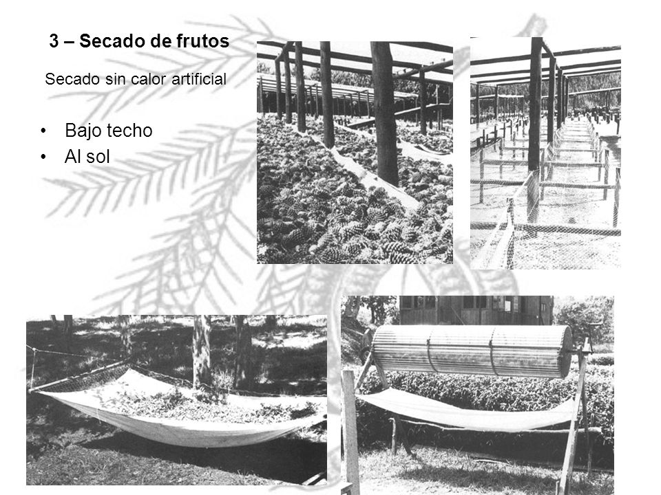 3 – Secado de frutos Secado sin calor artificial Bajo techo Al sol