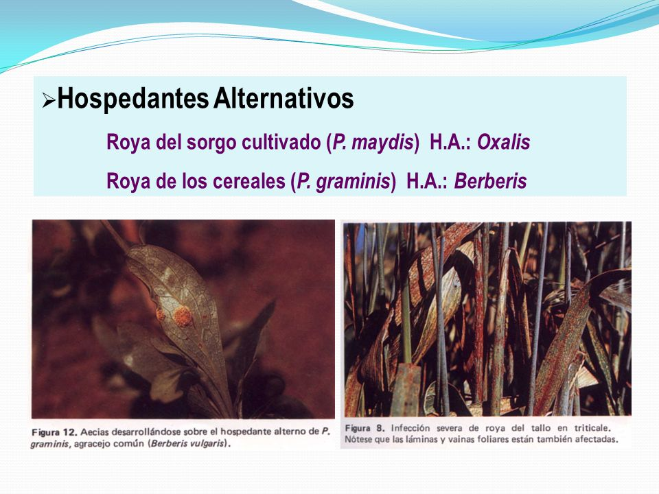 Hospedantes Alternativos
