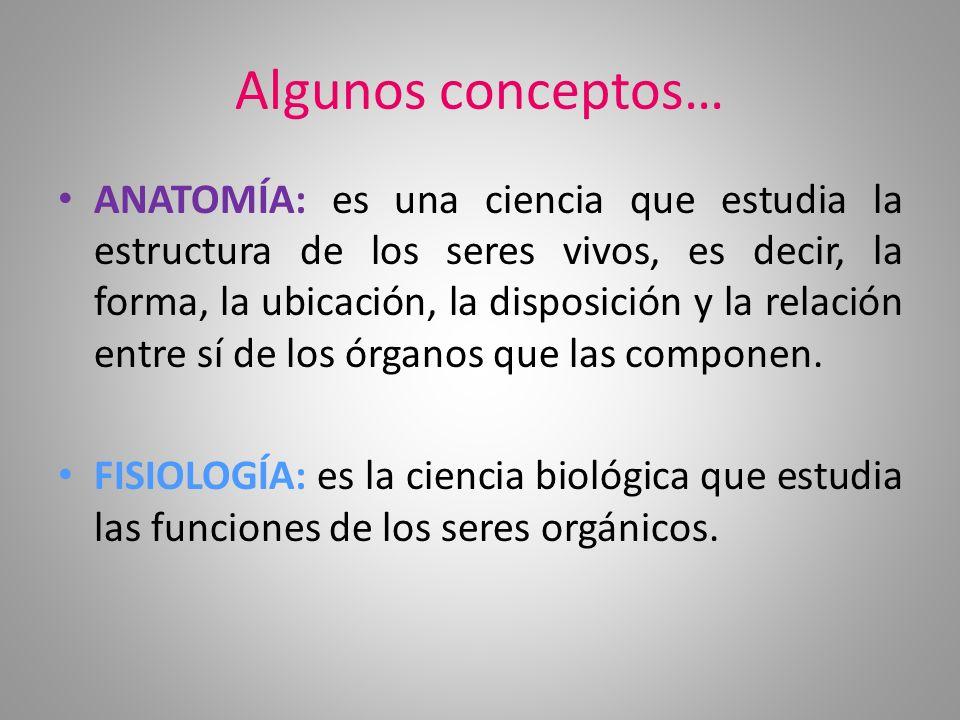 Vistoso Cuál Es La Definición De La Anatomía Y Fisiología Ideas ...