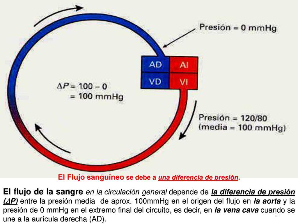 Circuito Sanguineo : PanorÁmica de la circulaciÓn; fÍsica medica de la presion el flujo