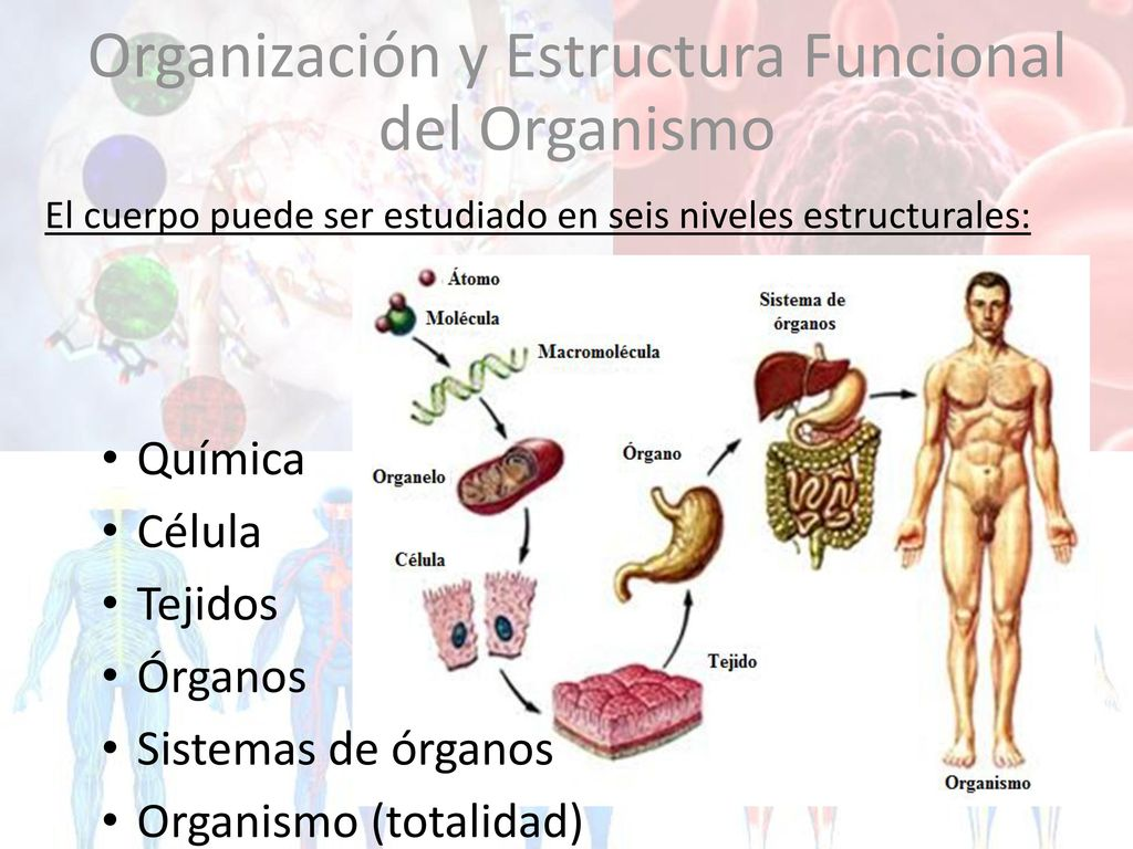 Módulo II Genética & Embriología - ppt descargar