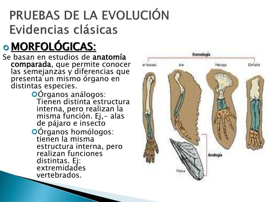 ORIGEN Y EVOLUCIÓN DE LA VIDA - ppt descargar