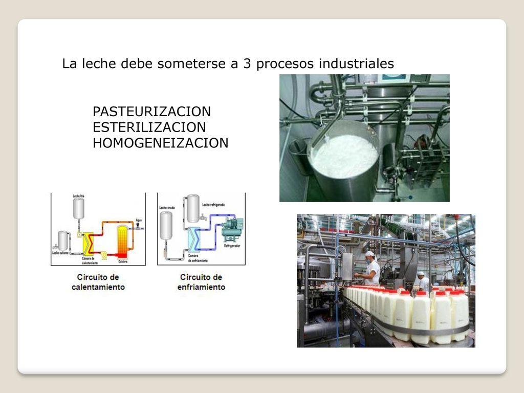 Circuito De La Leche : Circuito productivo