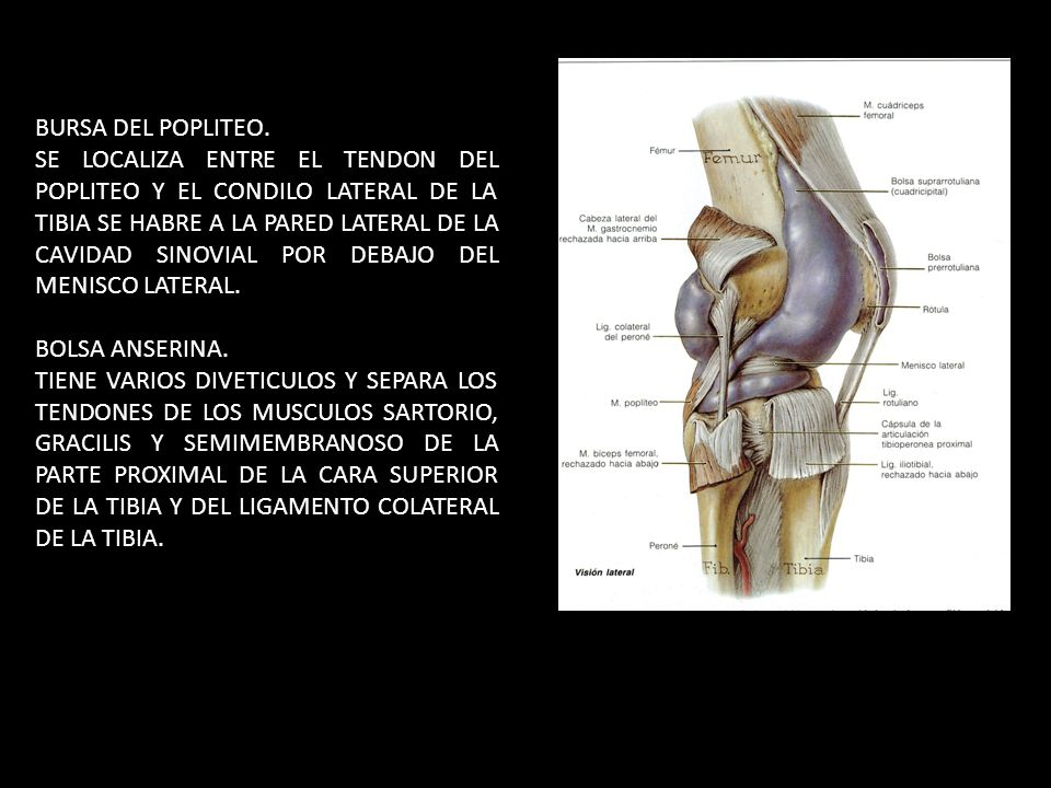 DR. IGNACIO LUGO ALVAREZ. - ppt video online descargar