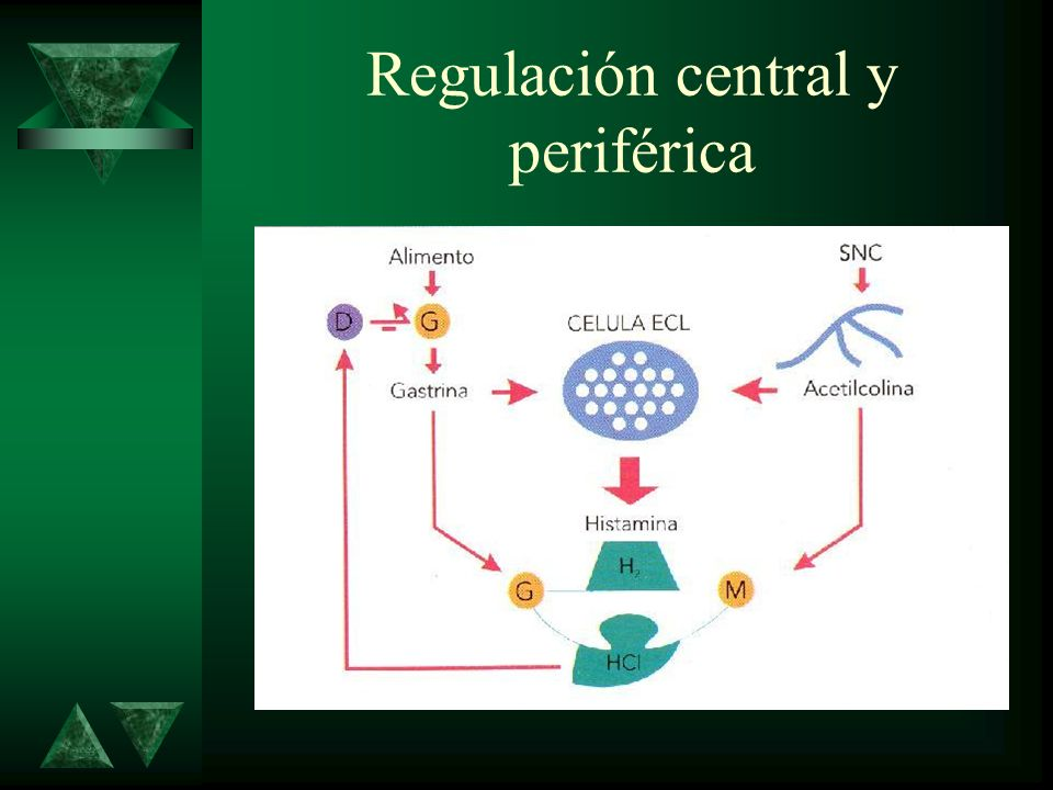 Regulación central y periférica