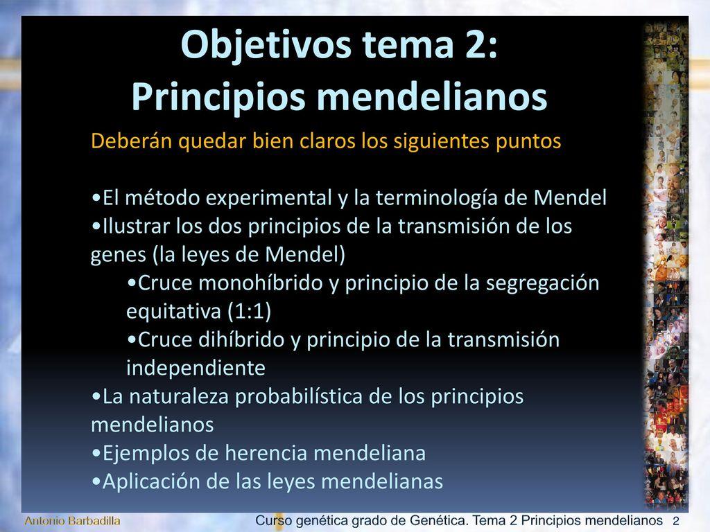 Principios mendelianos - ppt descargar