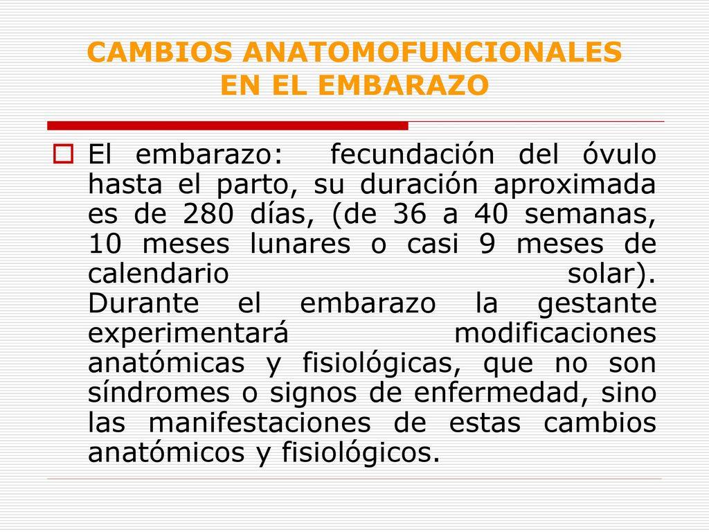 CAMBIOS ANATOMOFUNCIONALES EN EL EMBARAZO - ppt descargar