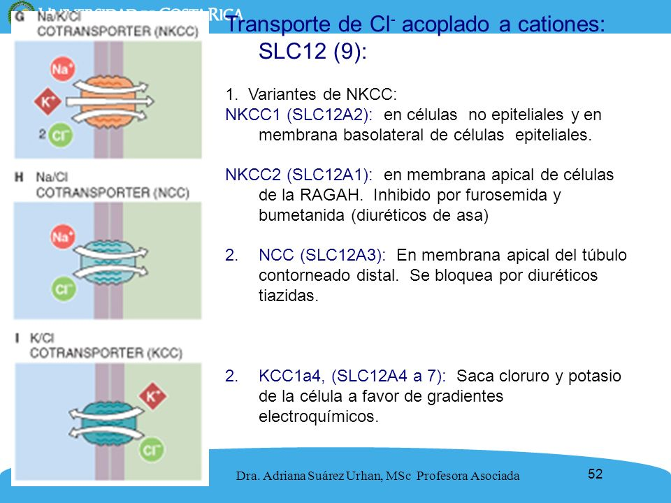 Transporte de Cl- acoplado a cationes: SLC12 (9):