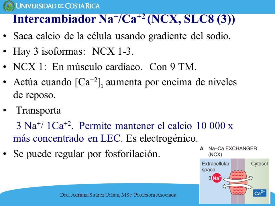 Intercambiador Na+/Ca+2 (NCX, SLC8 (3))