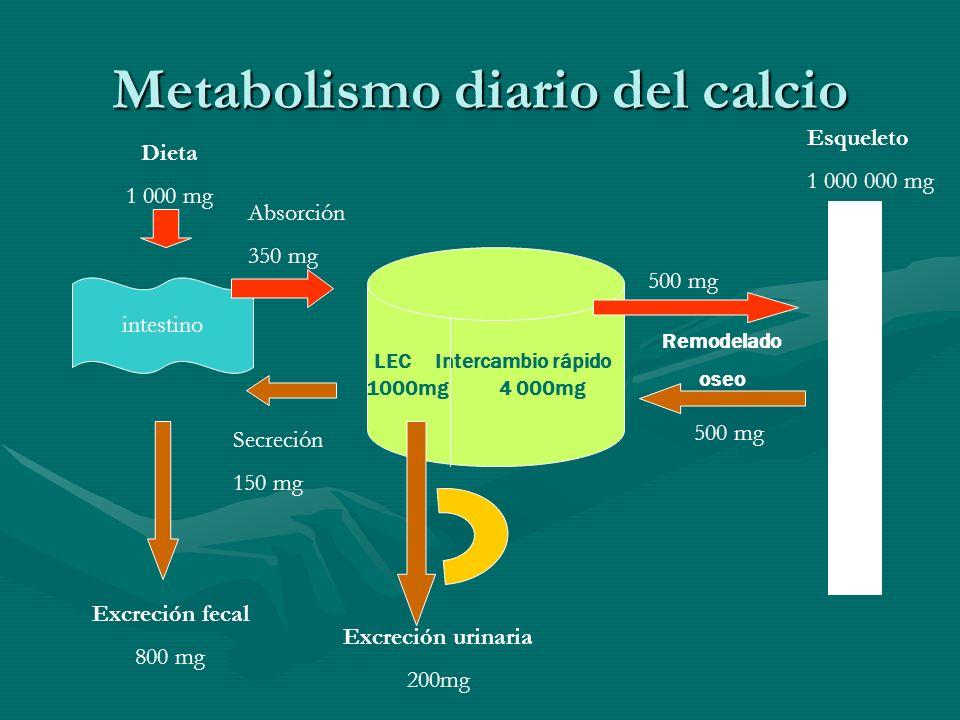 Regulación endocrina del metabolismo del calcio