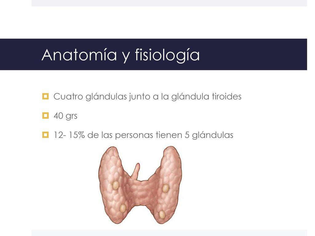 Glándulas paratiroides - ppt video online descargar
