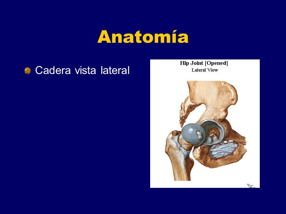 Fracturas De Cadera Ortopedia V AÑO UCR - ppt descargar