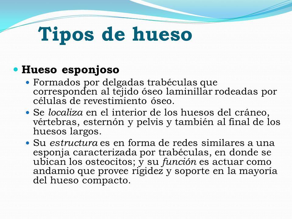 Gammagrafía ósea Dra. Ana Alfaro Arrieta Curso de Medicina Nuclear ...