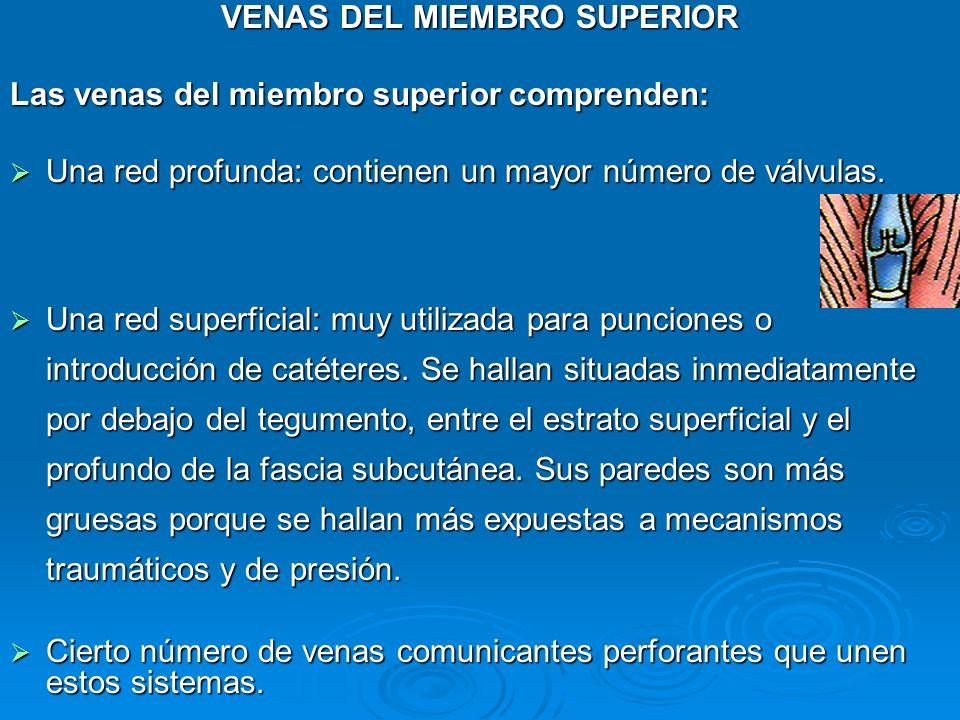 VENAS DEL MIEMBRO SUPERIOR MSc. Elena Mora Escalante - ppt video ...