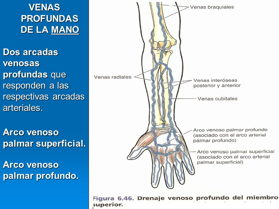 VENAS DEL MIEMBRO SUPERIOR MSc. Elena Mora Escalante - ppt video ...